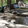 Louisiana locals continue to fish despite oil contamination risk
